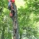 Voir le profil de Entretien Arbres Guillaume Brossard Arboriculture Elagage Enr - Repentigny