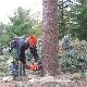 Entretien Arbres Guillaume BrossardArboricultureElagage Enr - Service d'entretien d'arbres - 514-802-6683