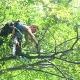 View Entretien Arbres Guillaume Brossard Arboriculture Elagage Enr's Saint-Bruno profile