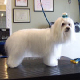La Griffe Toilettage Kathy Gauthier - Pet Grooming, Clipping, & Washing - 819-609-1468