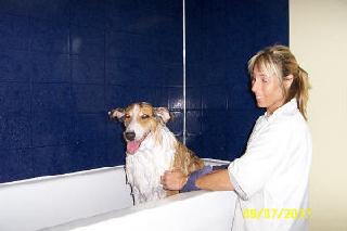 La Griffe Toilettage Kathy Gauthier - Photo 8