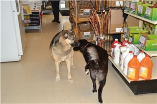 Feed Store The/Pet Junction - Photo 4