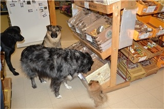 Feed Store The/Pet Junction - Photo 8