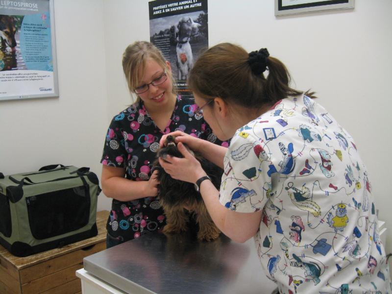 Clinique Vétérinaire de Lyon - Photo 5