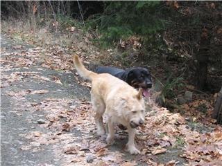 Dog Walking Services Duncan Bc