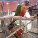 Petland - Pet Shops - 604-541-2329
