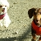 Canine Campus Dog Daycare And Training Centre - Pet Care Services - 250-859-3647