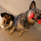 Jump Start Dog Training - Dog Training & Pet Obedience Schools - 416-782-7576