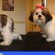 Tonte et Toilettage Guylaine Charest - Toilettage et tonte d'animaux domestiques - 418-285-3861
