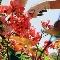 Harp Landscaping - Paysagistes et aménagement extérieur - 604-209-7063