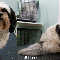 The Urbanhound - Pet Grooming, Clipping, & Washing - 519-732-1711