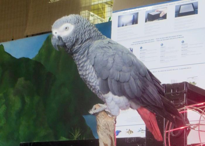 Paradise Pet Centre - Photo 3