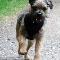 West Shore Pet Service & K9 Adventures - Kennels - 250-920-5678
