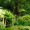Gardenwise Design & Maintenance - Landscape Contractors & Designers - 250-339-1379