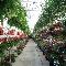 Fred's Farm Fresh International Market & Deli - Grocery Stores - 519-966-2241