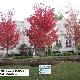 Caledon Treeland - Nurseries & Tree Growers - 905-880-1828