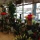 Baroness Floral Design - Florists & Flower Shops - 905-851-1270