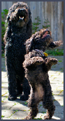 Scooby's Dog Waste Removal Service - Photo 3