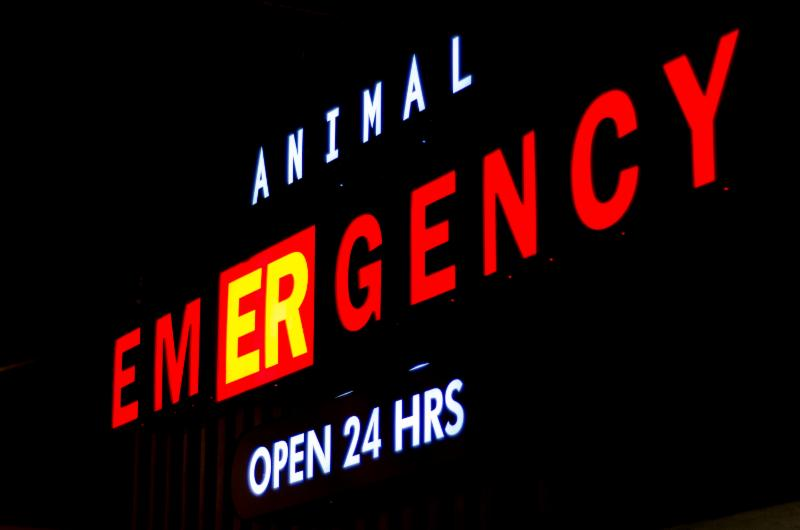 Vancouver Animal Emergency Clinic - Photo 11