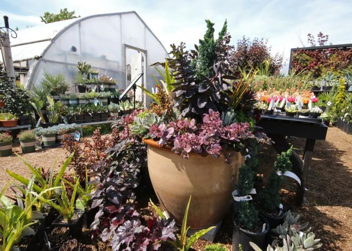 Phoenix Perennials & Specialty Plants - Photo 2