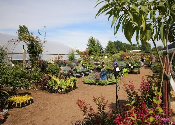 Phoenix Perennials & Specialty Plants - Photo 3