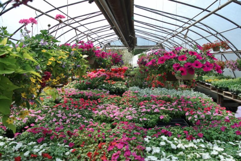 Baltimore Valley Produce & Garden Centre - Photo 8