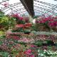 Baltimore Valley Produce & Garden Centre - Fruit & Vegetable Stores - 905-372-2662