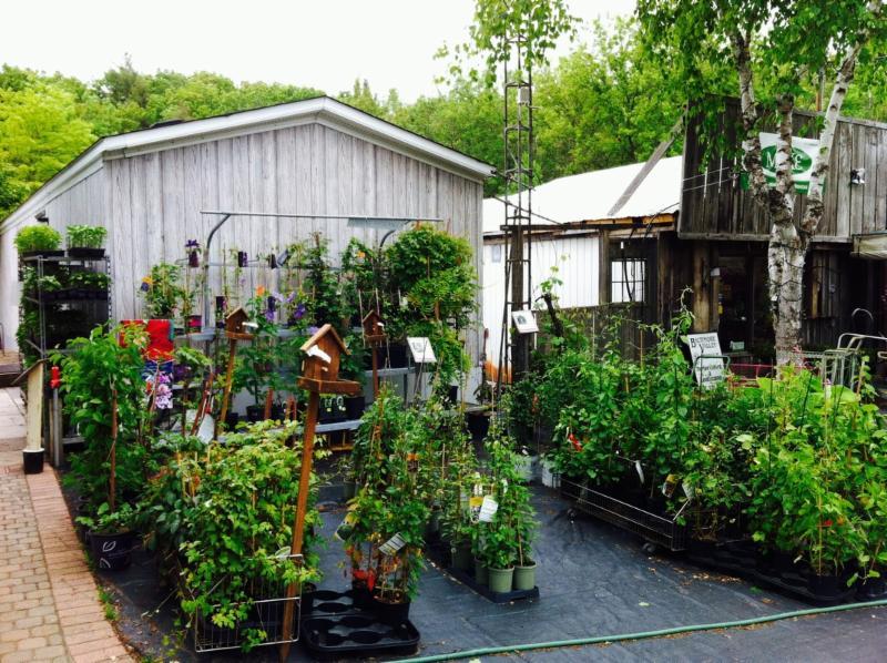 Baltimore Valley Produce & Garden Centre - Photo 10