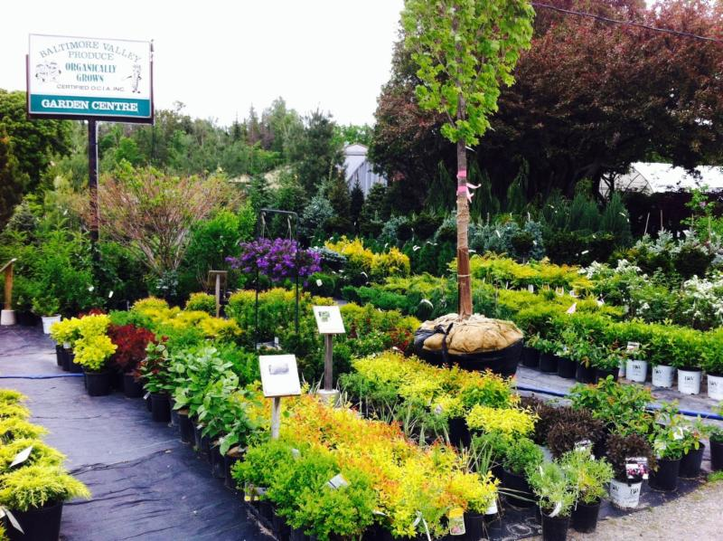 Baltimore Valley Produce & Garden Centre - Photo 5