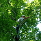 Meadowood Tree Service - Tree Service - 905-936-1179