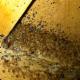 Associated Victoria Pest Control Ltd - Pest Control Services - 250-477-0322