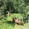 Anderson Valley Ranch Riding & Camping - Horse Riding Centres - 403-637-3737