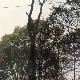 Arbres Service Katra Inc - Service d'entretien d'arbres - 418-833-4752