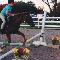 Reschburl Esquestrian Centre - Riding Academies - 905-319-0451