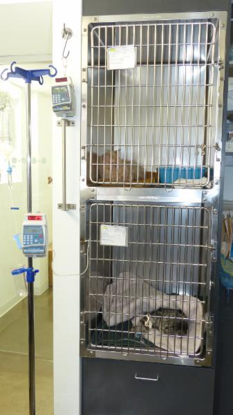 Chats Montréal-Clinique Vétérinaire Pour Chats - Photo 6