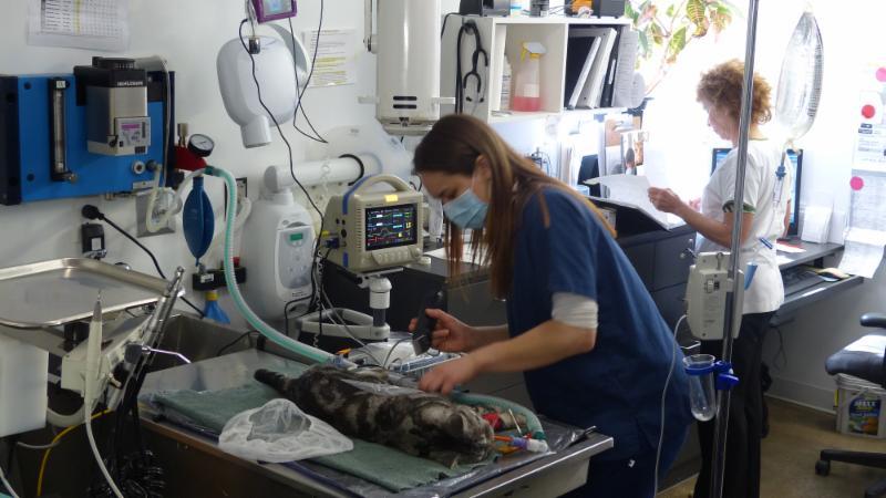 Chats Montréal-Clinique Vétérinaire Pour Chats - Photo 4