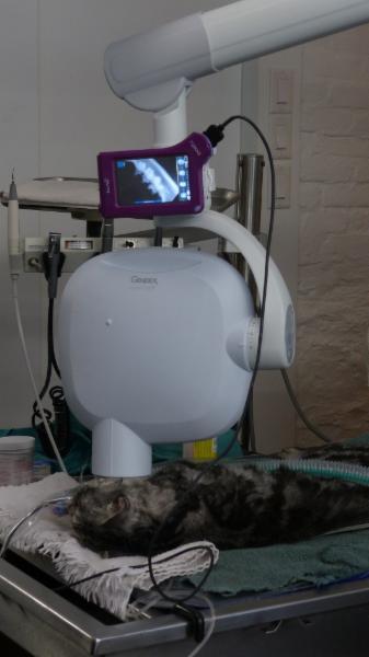 Chats Montréal-Clinique Vétérinaire Pour Chats - Photo 5