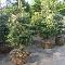 Plantex Enr - Nurseries & Tree Growers - 450-293-4367