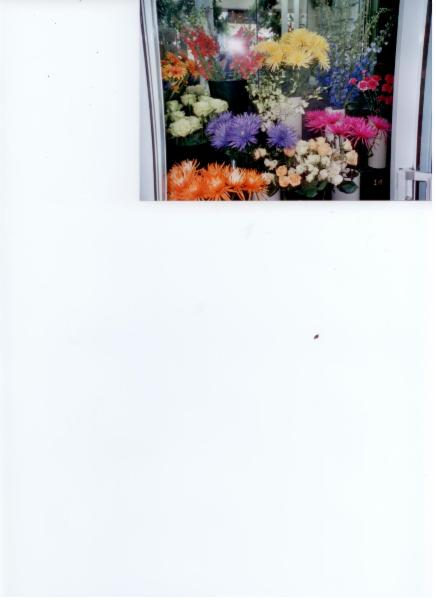 Florist Royal (Gala D'Outremont) - Photo 6