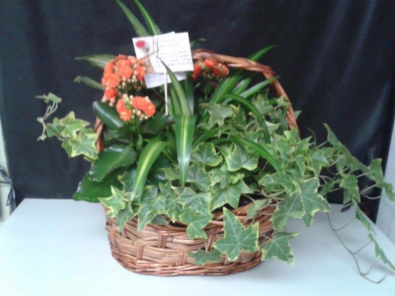 Arrangement de plante verte