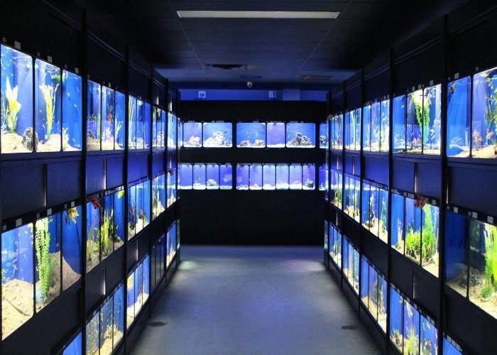 Pisces Pet Emporium - Photo 2
