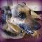 Canine Companion Clinic - Kennels - 403-265-8387