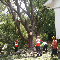 View Total Tree Care's Grimsby profile