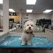 Vanity Fur Pet Spa & Boutique - Pet Grooming, Clipping, & Washing - 905-274-7387