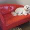 View Vanity Fur Pet Spa & Boutique's Greater Toronto profile