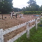Colonial Equestrian Centre - Riding Academies - 905-623-7336