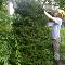Treecologic - Landscape Contractors & Designers - 506-440-5325