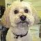 Ruff Cuts Pet Grooming - Pet Grooming, Clipping, & Washing - 905-335-0898
