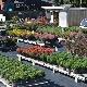 Springbank Greenhouses & Nursery - Garden Centres - 905-278-5964