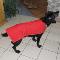 L'Auberge K-Nine Inn Le Yapeux - Pet Sitting Service - 819-281-2220